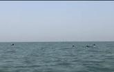 কক্সবাজারে সমুদ্রে ডলফিনের ঝাঁক আর বালিয়াড়িতে সবুজের সমারোহ
