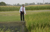 India gets first herbicide-tolerant & non-GM rice varieties