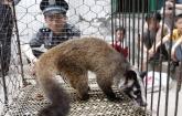 China bans trade, eating of wild animals in battle against coronavirus
