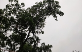 বাগেরহাটে ভারী বর্ষণ: শঙ্কিত উপকূলবাসী