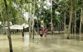 water level Dharla-Teesta Kurigram above danger level flood again
