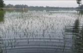 টাঙ্গাইলে চলতি বন্যায় ৮০ হাজার কৃষকের ৬৭ কোটি টাকার ক্ষতি