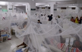36 dengue patients are undergoing treatment at the hospital